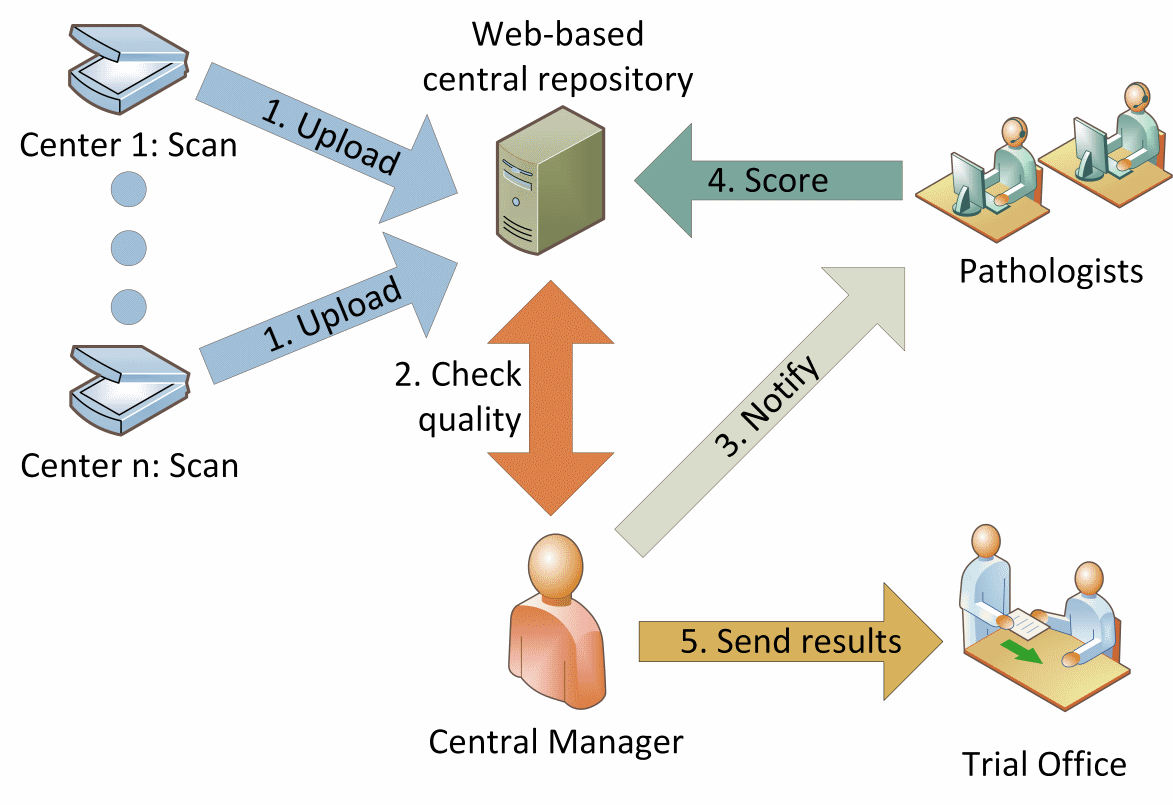 Diagram of organization of the study
